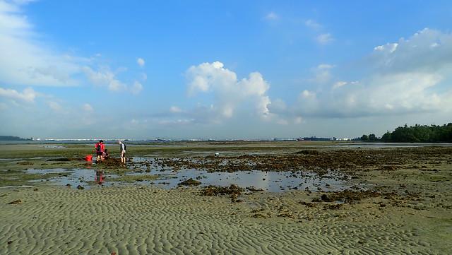 Bryozoan survey, Semakau South