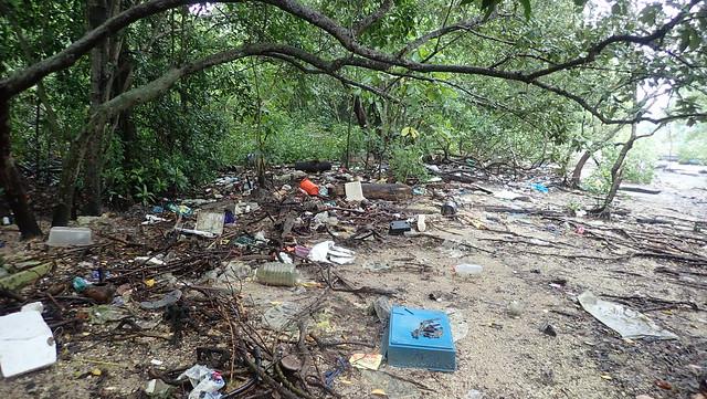 Trash at Lim Chu Kang mangroves, May 2019