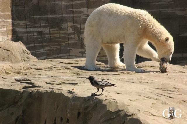 Besuch Zoo Rostock 22.+23.04.2019118