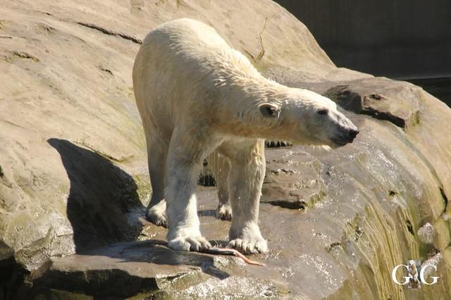 Besuch Zoo Rostock 22.+23.04.201984