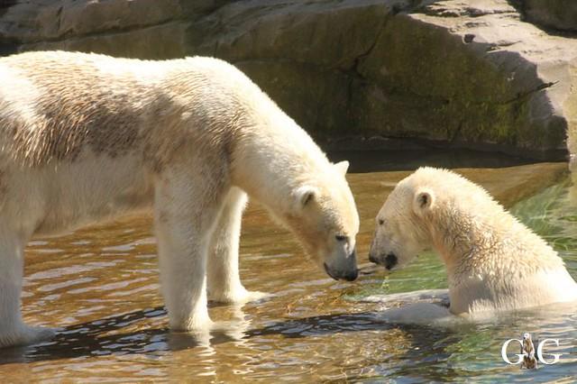 Besuch Zoo Rostock 22.+23.04.201972