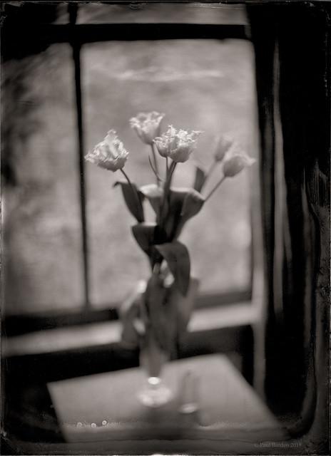 Voigtlander Tulips #8