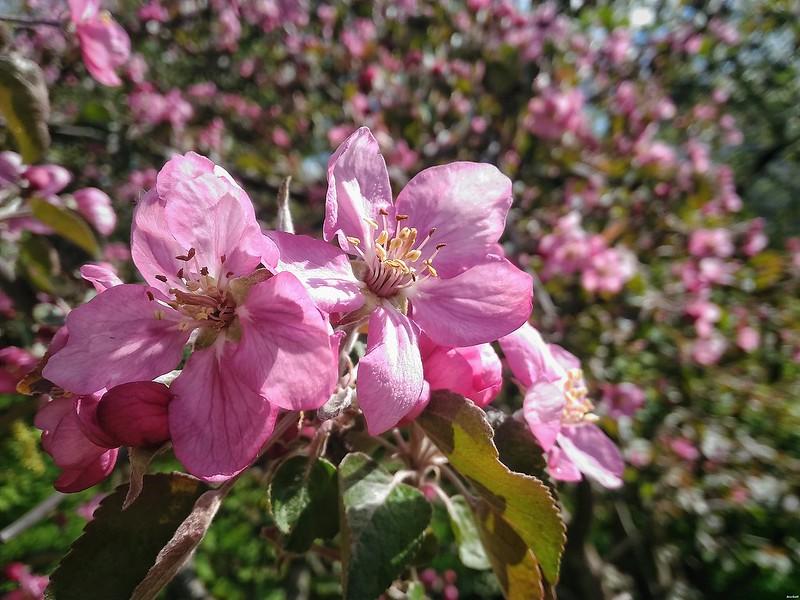 spring_again