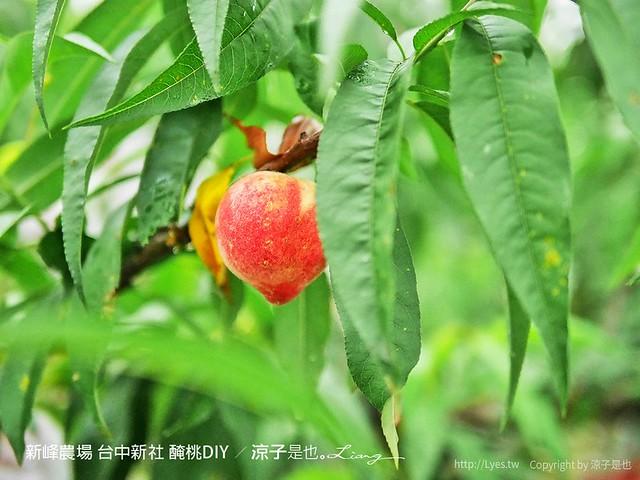 新峰農場 台中新社 醃桃DIY 6