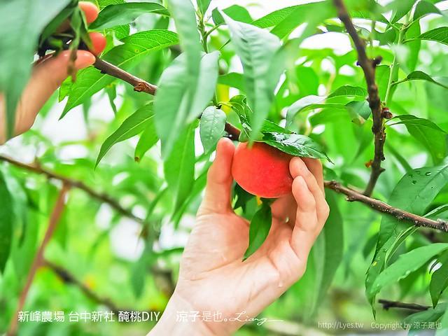 新峰農場 台中新社 醃桃DIY 8