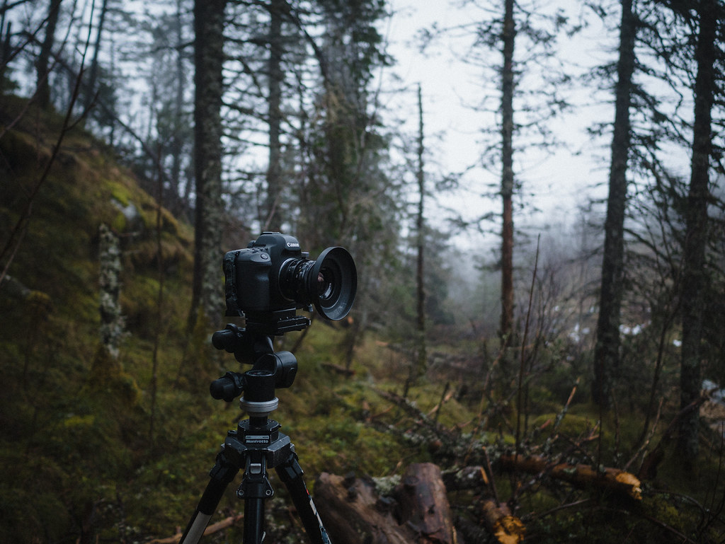 Camera and tripod in the fog in the woods.