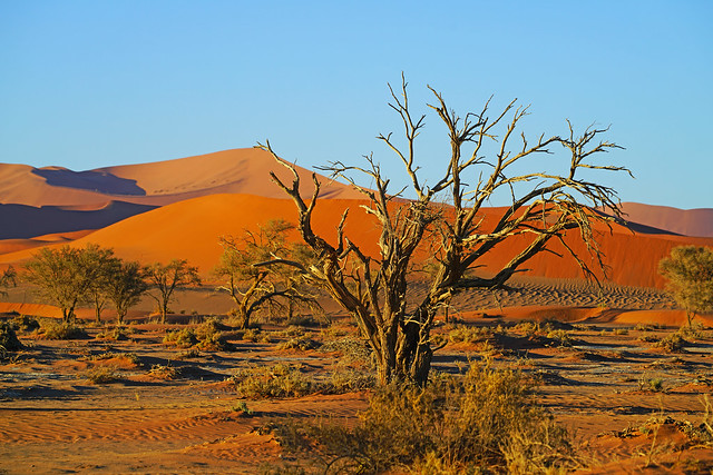 Namibian scenery with a dry tree, Sossusvlei