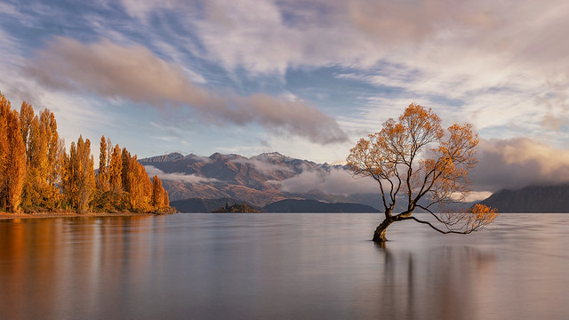 Autumn at The Wanaka Tree, Lake Wanaka, New Zealand - a short while after sunrise, the sunlight hit the tree & poplars on the shore, setting them ablaze!