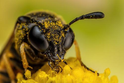 Feeding Sawfly