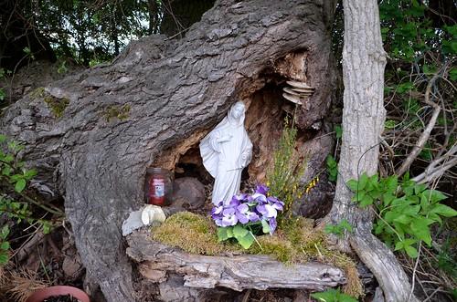 Madonna tree
