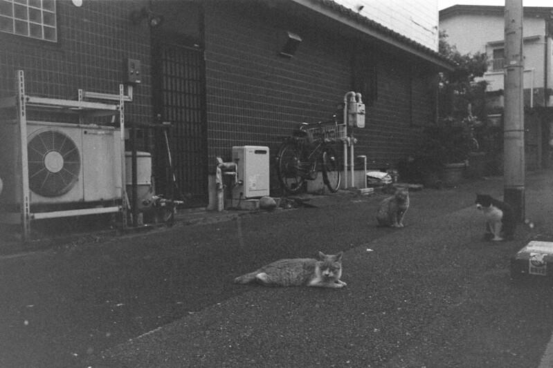 058LeicaM2 Summaron 35mm f35 Kodak 400TX池袋三丁目