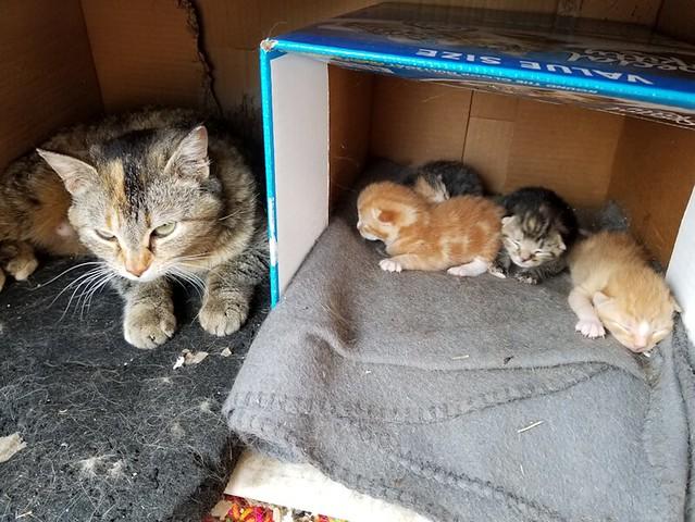 20190513.kittens.story.1