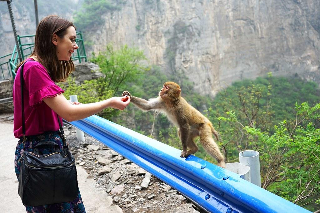 Monkey MountainGongyi, Zhengzhou, China