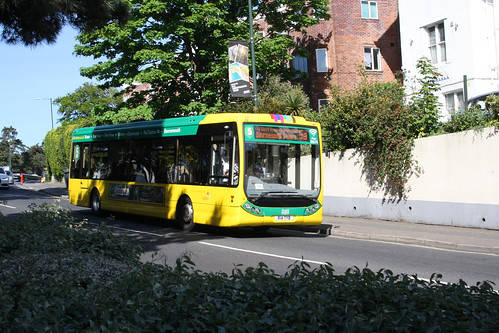 Yellow Buses 14 R14TYB