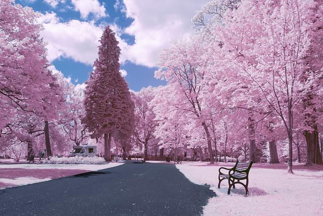 Park Infrared