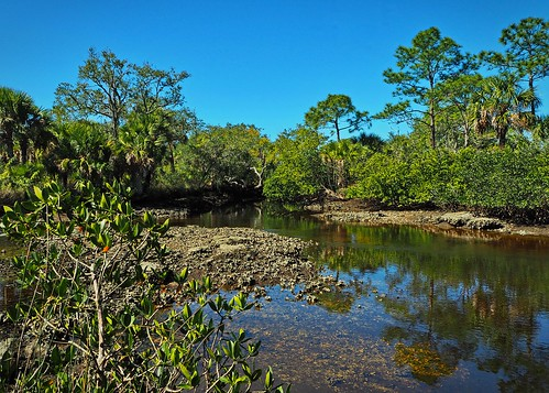 florida portrichey unitedstates statepark nature naturereserve park water tree trees springs