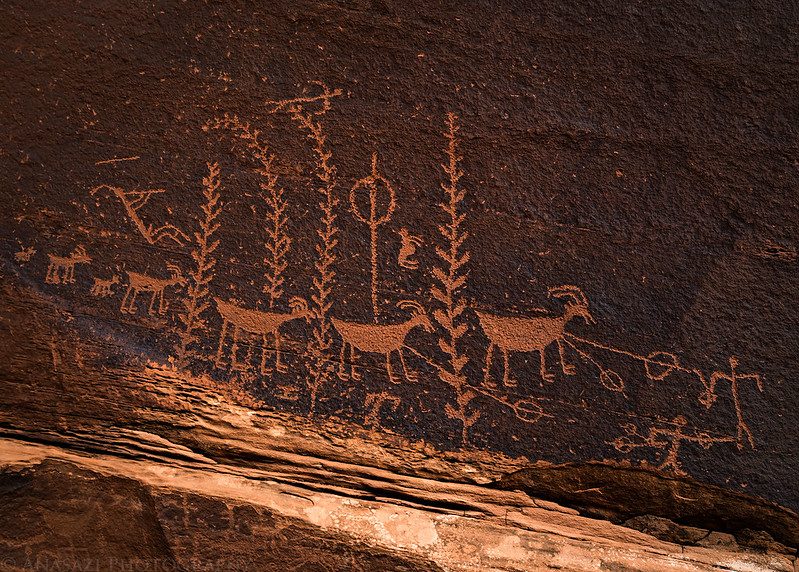 Ancient Life Petroglyphs