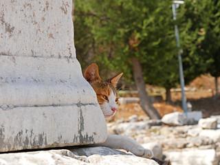 土耳其艾菲索斯古城貓咪