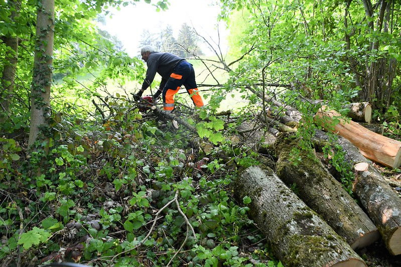 Tree Cutting 16.05 (7)