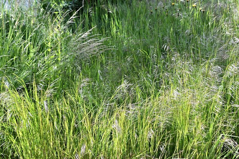 Reeds 16.05.2019