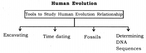 Heredity and Evolution Class 10 Notes Science Chapter 9 9