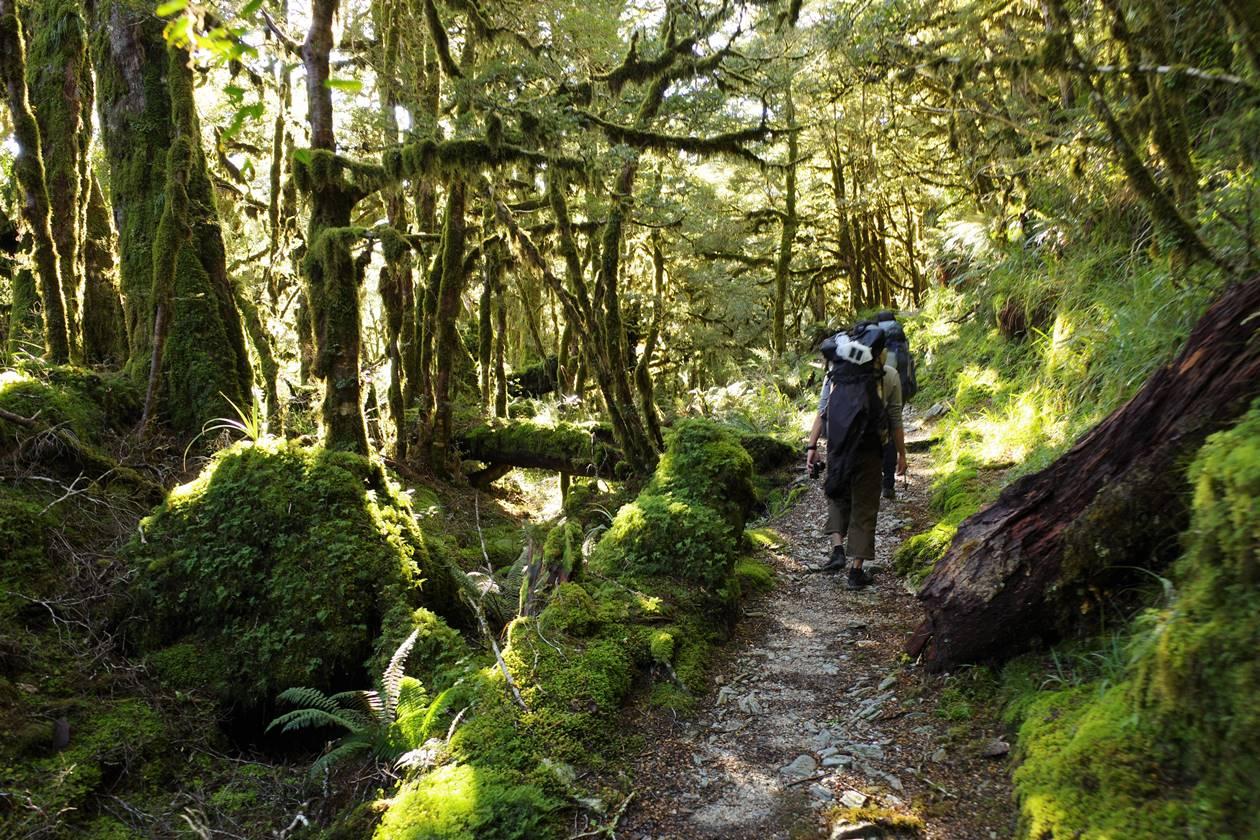 ルートバーントラック 苔と緑が美しい森