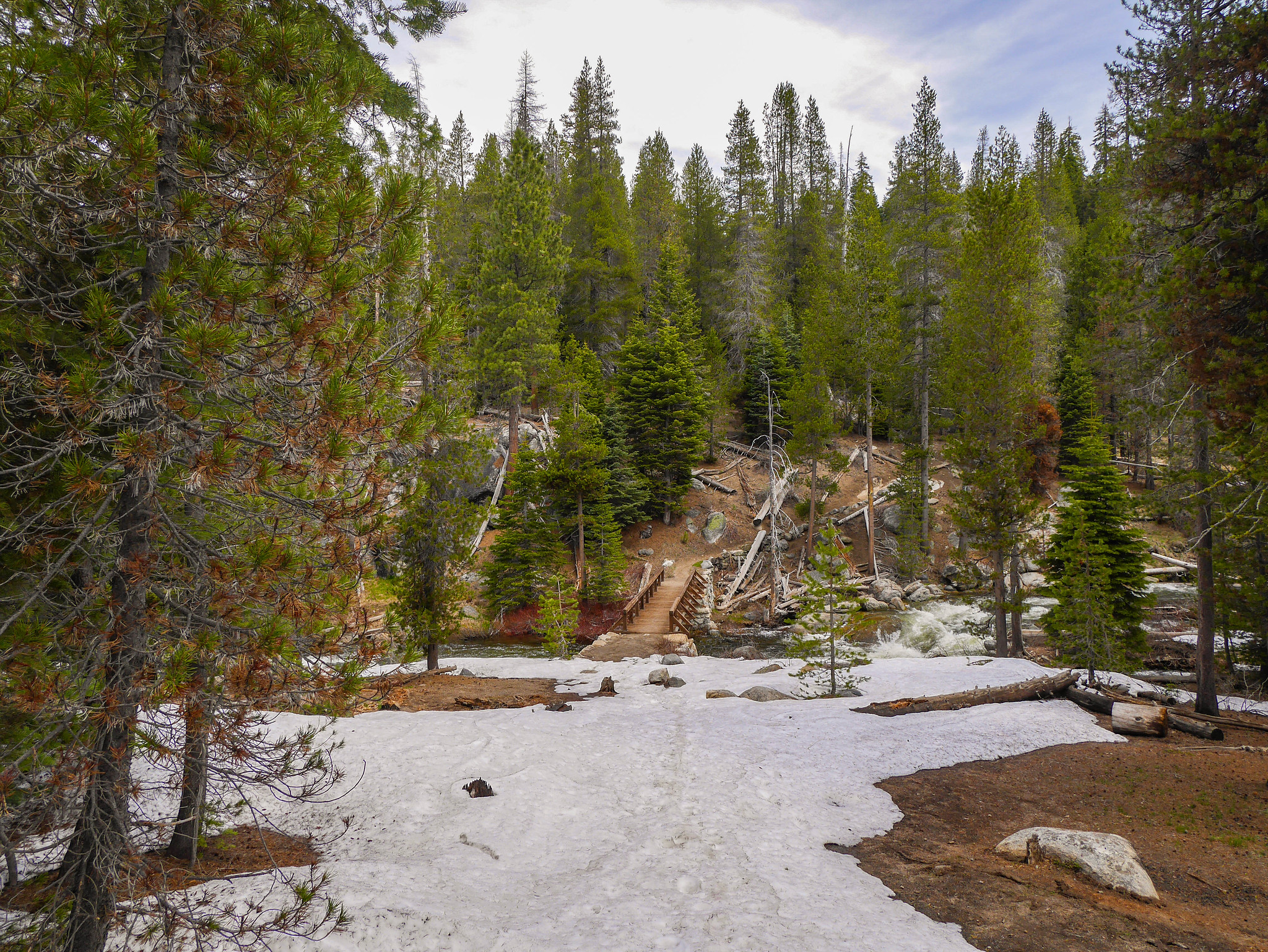 Tons of downed trees and snow between Dewey and Taft Points