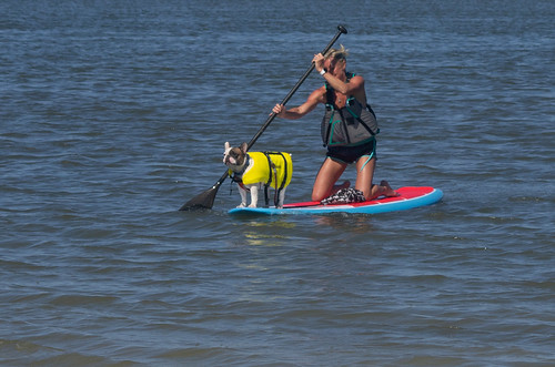 Momma and fur baby ride the paddle board | by photolady1995