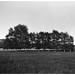 Darkroom print: Birketræer, Nivå