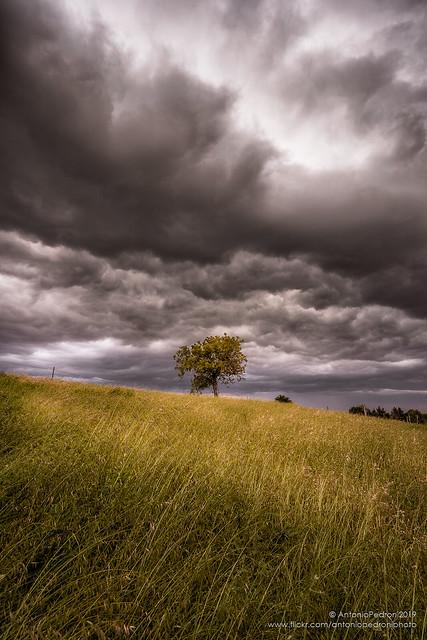 L'albero nella tempesta