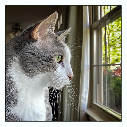 0519 window quinnomannion happycaturday 2019 home cat eastbridgewater massachusetts unitedstatesofamerica