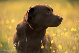 lizzy - a heart of gold   by fen pilchaert