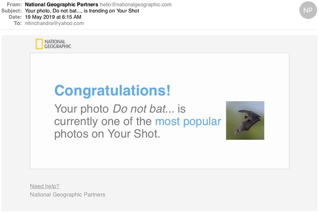 Your photo Do not bat is trending on Your Shot