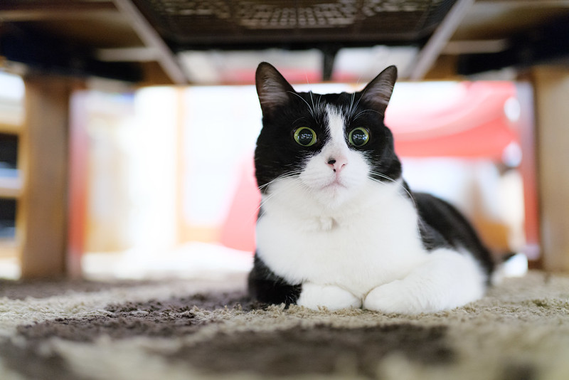 Cats like narrow places