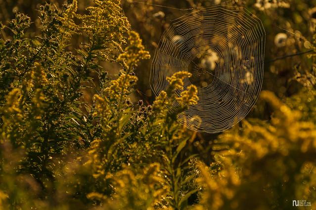 _DSC3672_Sunrise web