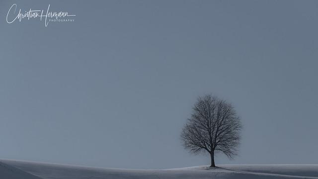 tree in winter, Switzerland