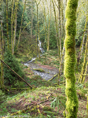 trees water moss rainforest stream britishcolumbia nanaimo vancouverisland olympusomdem1 mzuiko714mmf28pro nanoosereststop portraitorientation