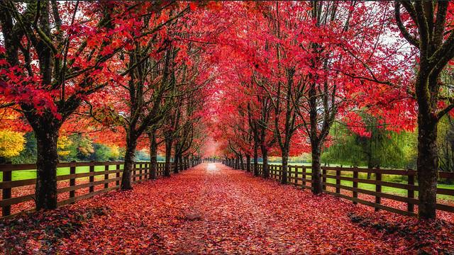 Autumn Dream - D800-2-5-17DSC_7867_20350