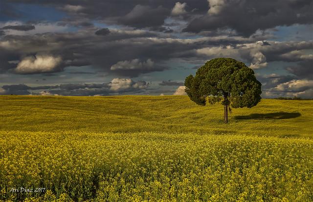El árbol como protagonista: El pino solitario