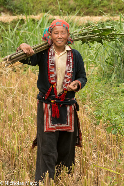 Red Dao Woman In Field