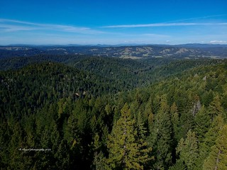 One hundred and eighty eighty feet in the air somewhere in Mendocino. | by dinaboyer