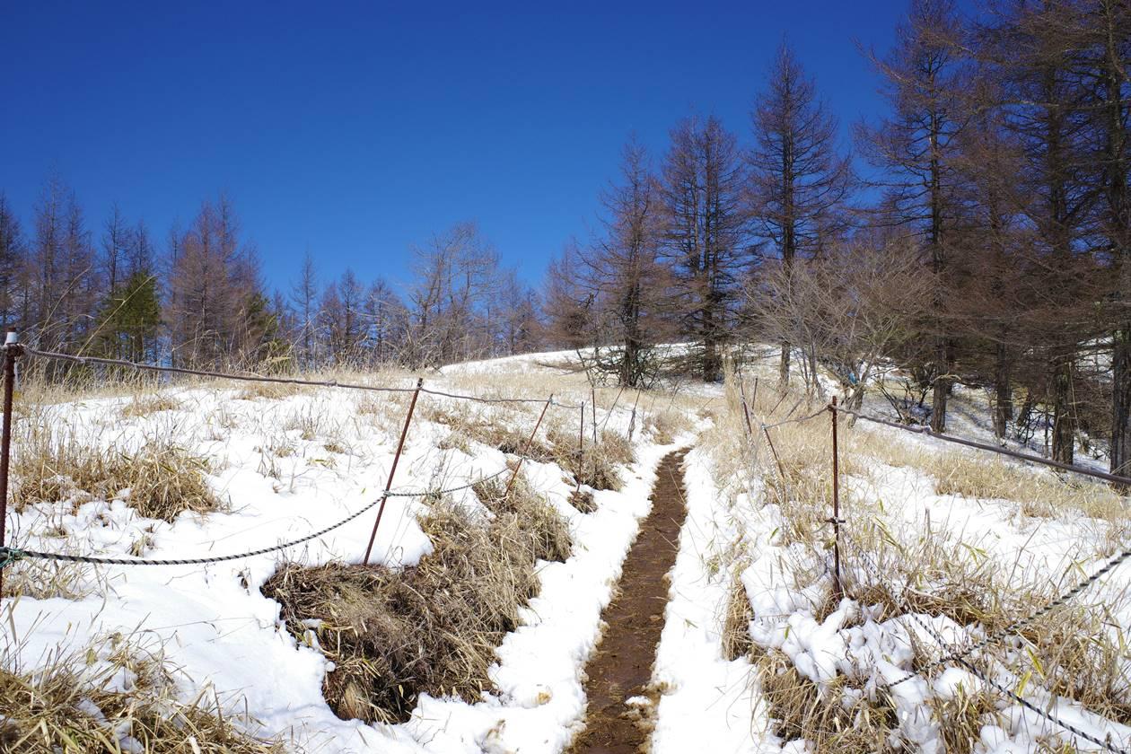 三ッ峠山 雪景色の草原