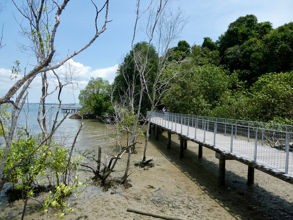 The mangrove boardwalk trail at the Chek Jawa wetlands