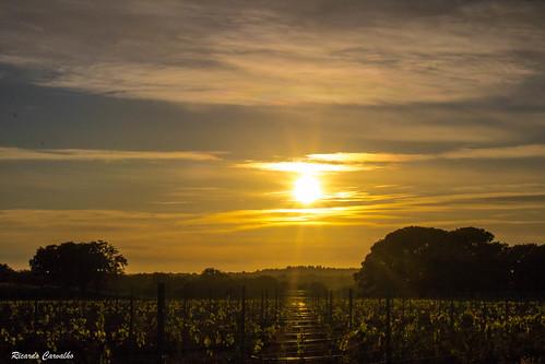 Sunset   by Rik_ ard80