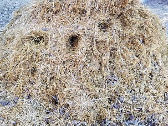 20190414.straw.nests