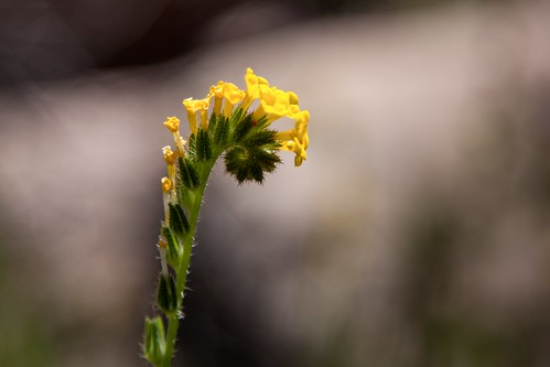 Yellow Flower | by chadwanstreetphotography