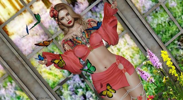 Miss Butterfly ♥