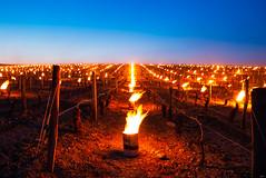 fire in the vineyards #fire #work #landscape #colors #vigne #vin #canon #2470mm 作者 Karl.T - Photogra