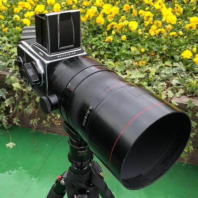 Rubinar 500mm f5.6 macro 花展