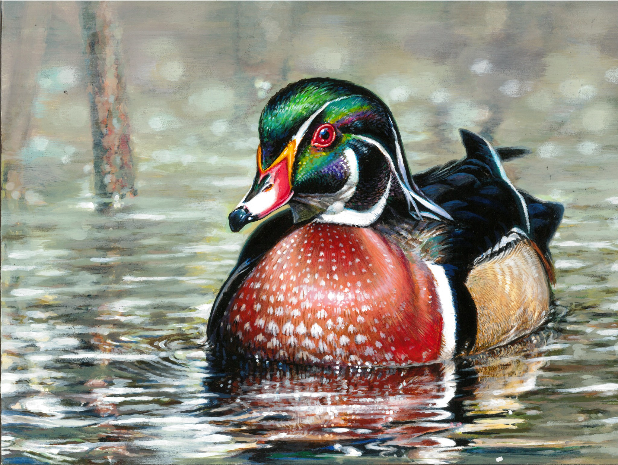Painting of a wood duck.